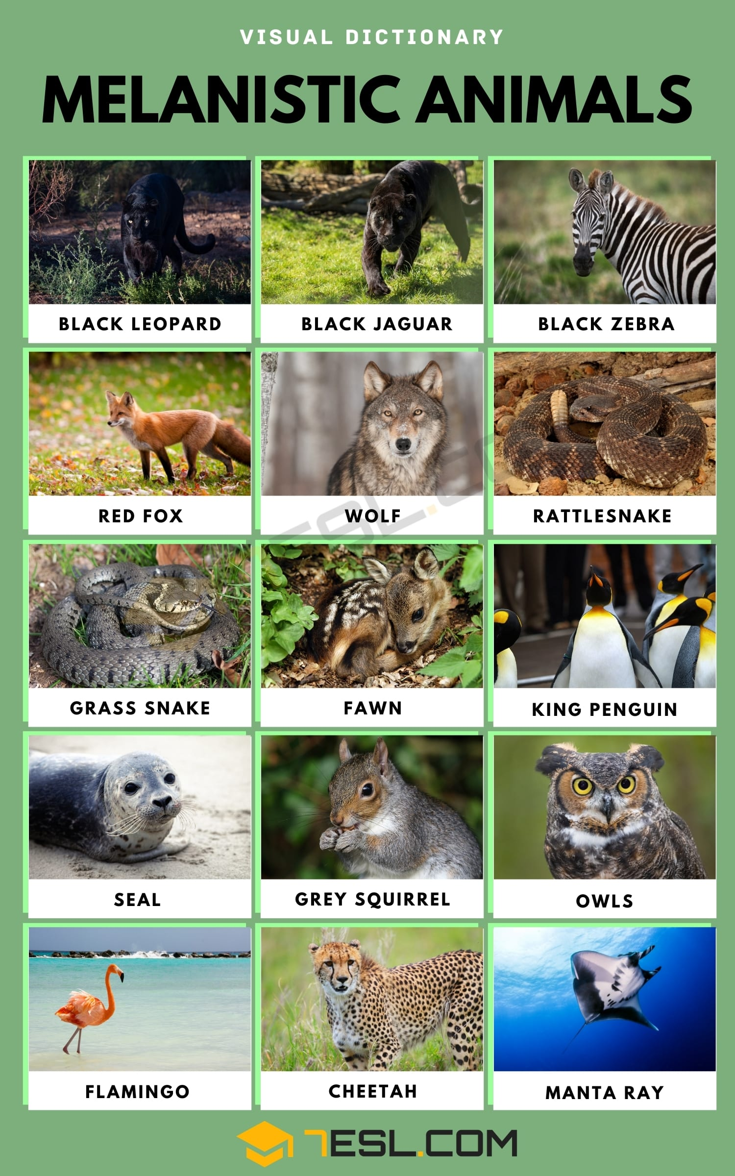 List of Melanistic Animals with Interesting Facts & Pictures