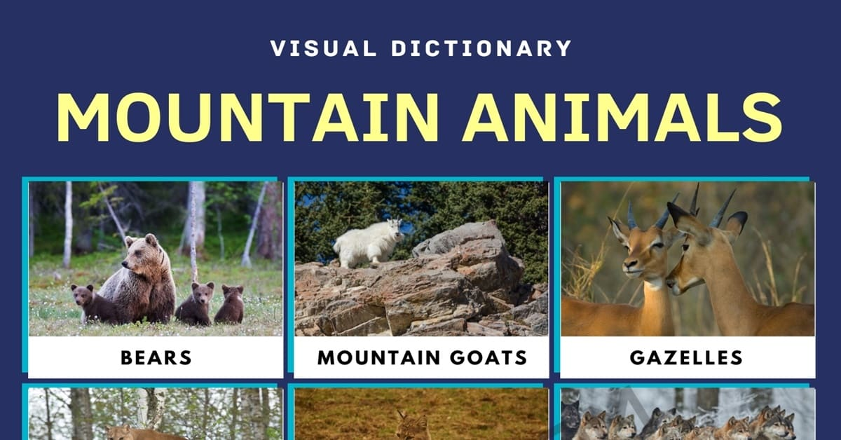 Mountain Animals | List of Animals that Live in the Mountain with Facts 1