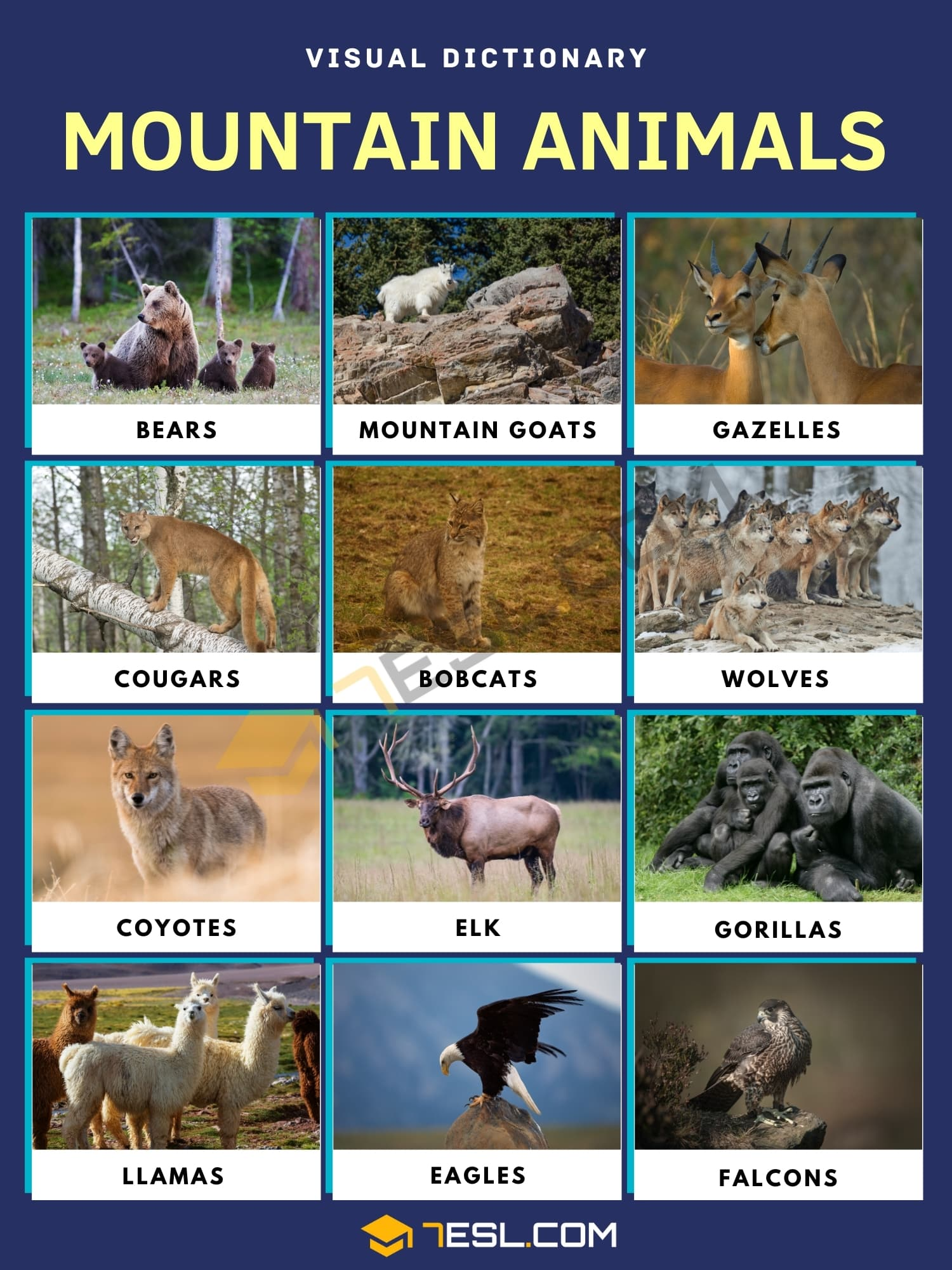 Mountain Animals | List of Animals that Live in the Mountain with Facts