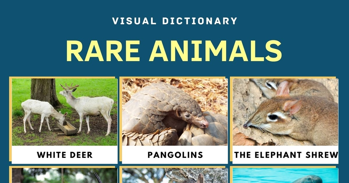 Rare Animals | Top 11 Rarest Animals in the World with Amazing Facts 1
