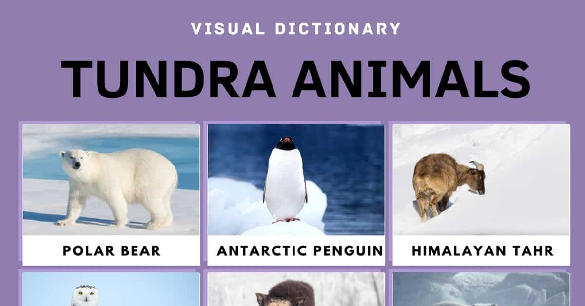 Tundra Animals: List of 15 Interesting Animals in the Tundra with Facts 1