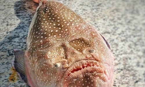 Deep Sea Creatures List with Amazing Facts and Pictures 5