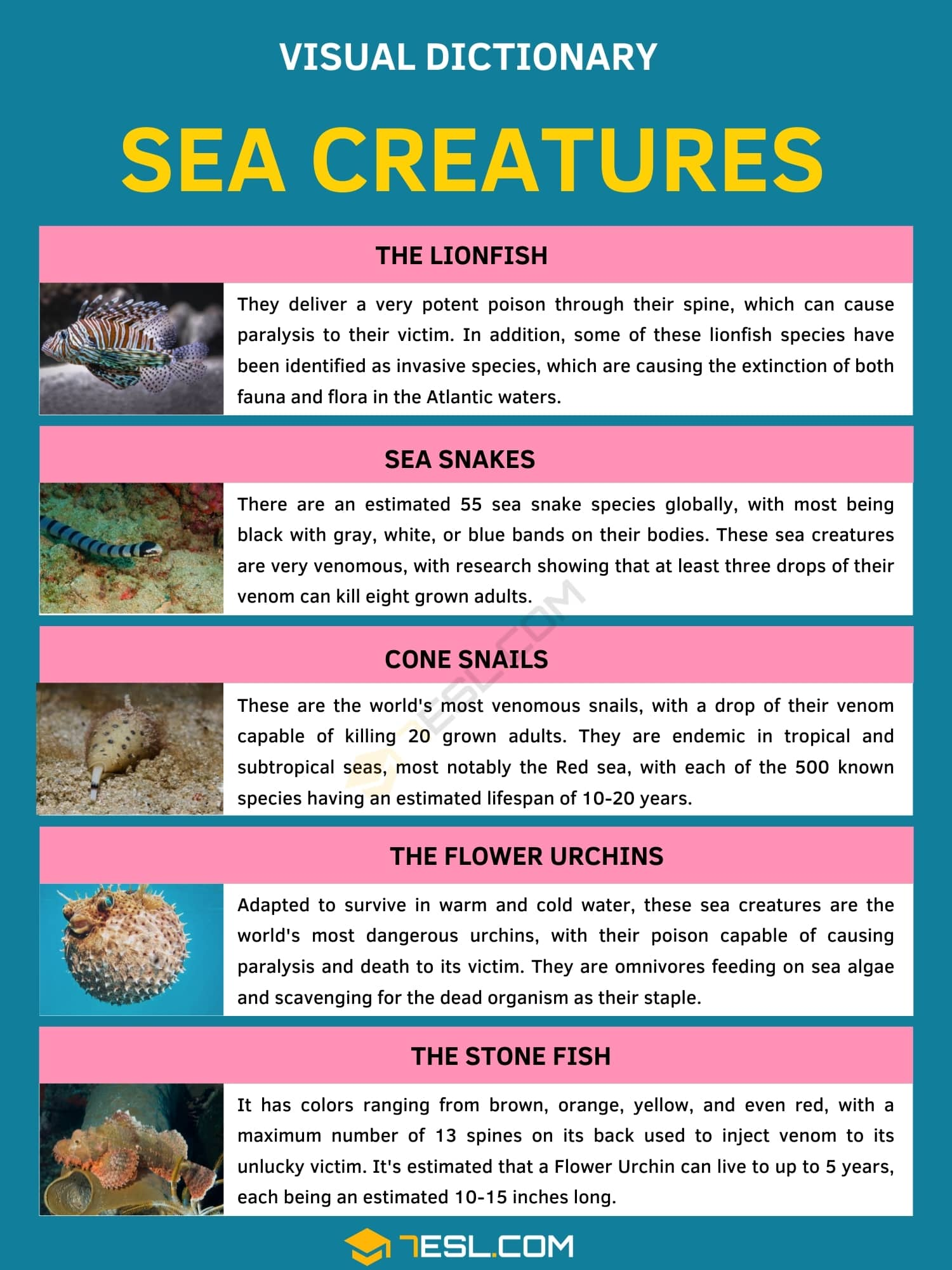 Sea Creatures | Top 5 Most Poisonous Creatures from the Sea
